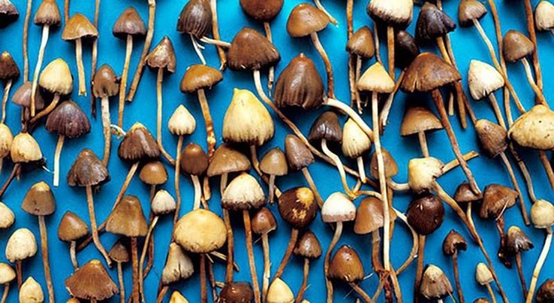Псилоцибины грибы