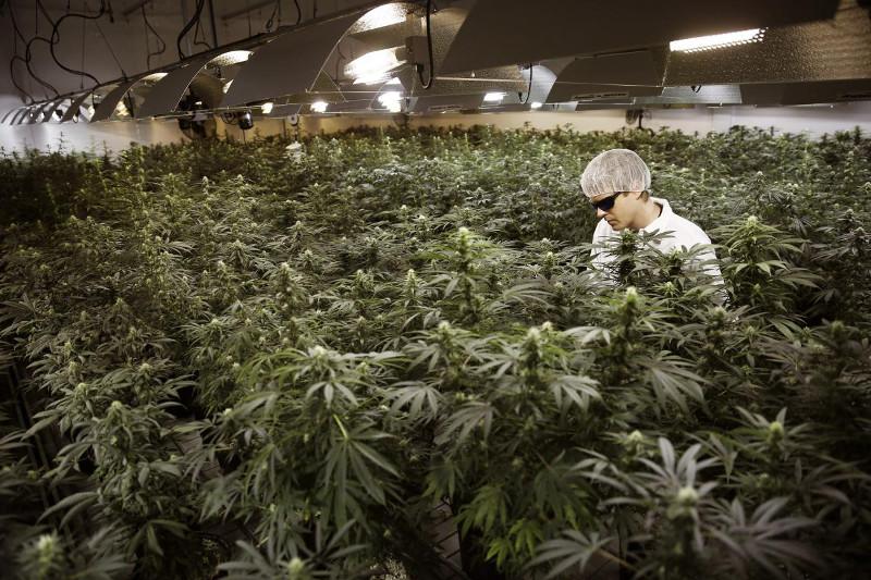 Трава - это наркотик с последствиями